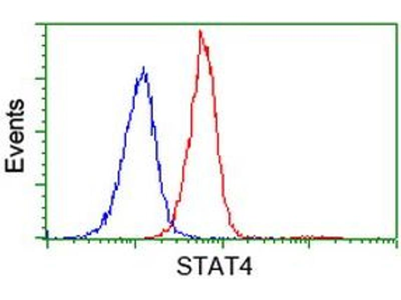 image for anti-Signal Transducer and Activator of Transcription 4 (STAT4) antibody (ABIN1501178)