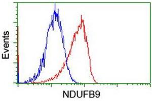 Image no. 4 for anti-NADH Dehydrogenase (Ubiquinone) 1 beta Subcomplex, 9, 22kDa (NDUFB9) (AA 3-179) antibody (ABIN1491359)