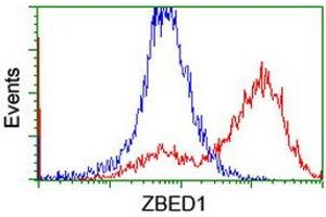 Image no. 2 for anti-Zinc Finger, BED-Type Containing 1 (ZBED1) antibody (ABIN1501794)