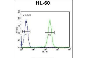 Image no. 3 for anti-BCL6 Corepressor-Like 1 (BCORL1) (AA 69-98), (N-Term) antibody (ABIN5535904)