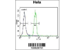 Image no. 2 for anti-SMT3 Suppressor of Mif Two 3 Homolog 1 (S. Cerevisiae) (SUMO1) (AA 1-30), (N-Term) antibody (ABIN1882136)