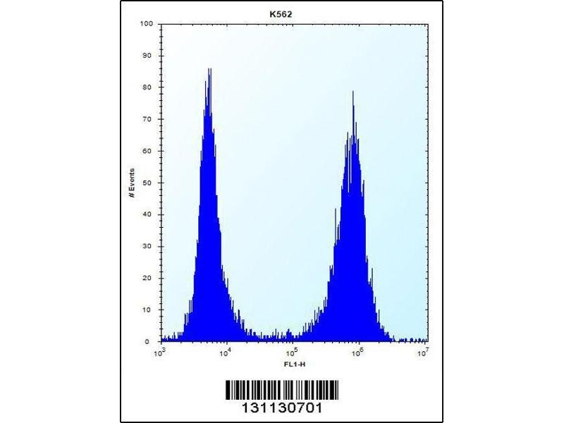 Flow Cytometry (FACS) image for anti-Chaperonin Containing TCP1, Subunit 8 (Theta) (CCT8) (AA 519-548), (C-Term) antibody (ABIN656431)