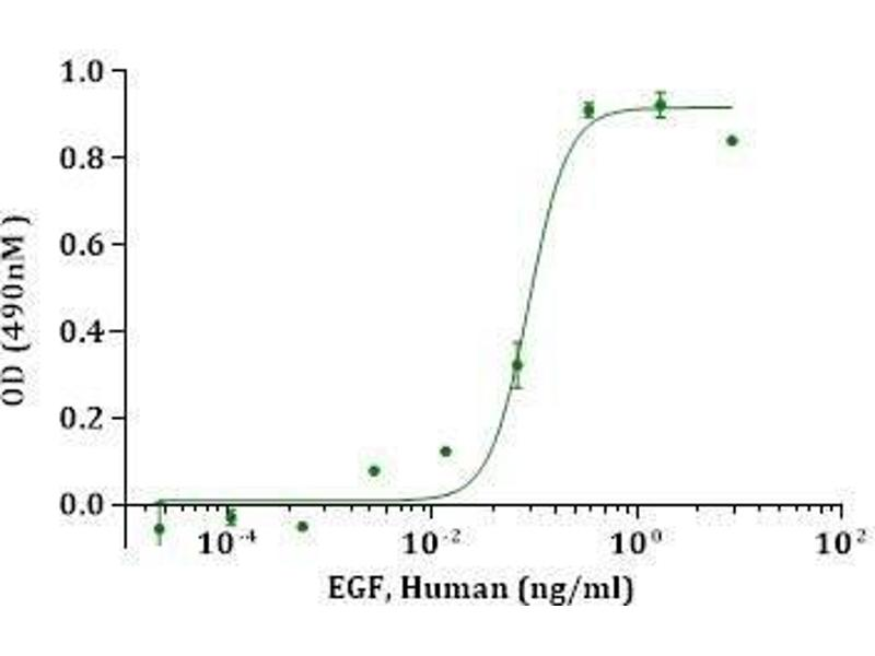 Activity Assay (AcA) image for Epidermal Growth Factor (EGF) (Active) protein (ABIN987821)