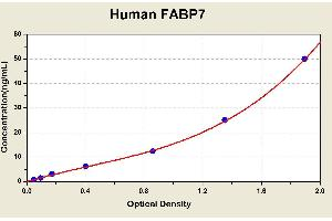 Image no. 1 for Fatty Acid Binding Protein 7, Brain (FABP7) ELISA Kit (ABIN1114869)
