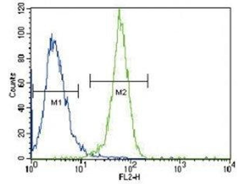 Flow Cytometry (FACS) image for anti-Phosphoglycerate Kinase 1 (PGK1) (AA 117-145) antibody (ABIN3032224)