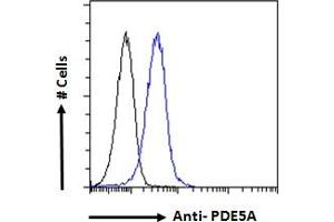Image no. 4 for anti-phosphodiesterase 5A, cGMP-Specific (PDE5A) (C-Term) antibody (ABIN185350)