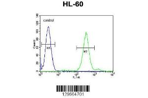 Image no. 1 for anti-Cornichon Homolog 2 (Drosophila) (CNIH2) (AA 31-59), (N-Term) antibody (ABIN655476)