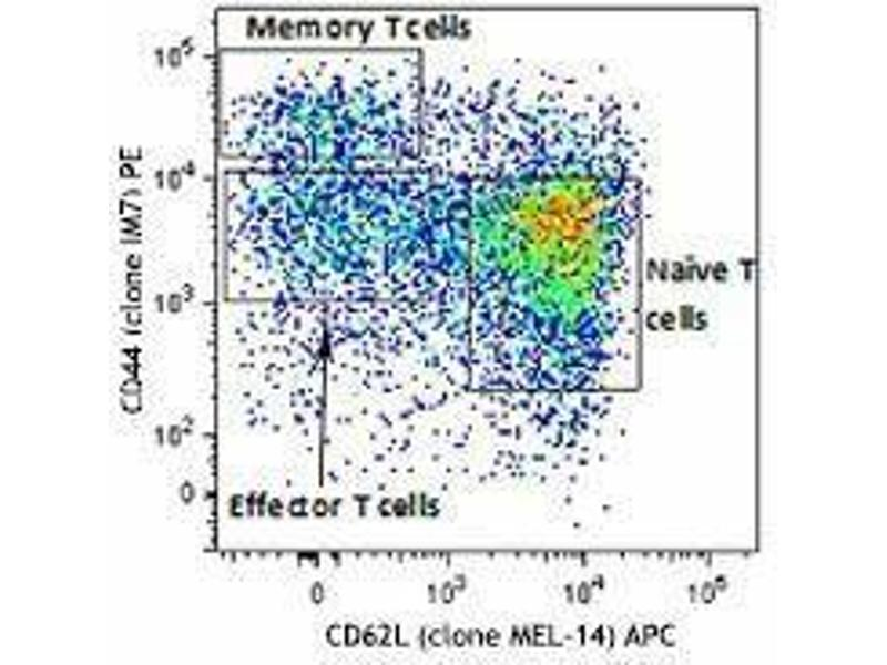 Flow Cytometry (FACS) image for Mouse Naive/Memory T cell ID Panel (ABIN2669200)