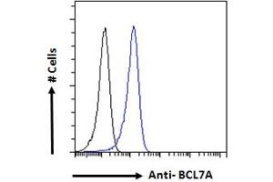 Image no. 4 for anti-B-Cell CLL/lymphoma 7A (BCL7A) (C-Term) antibody (ABIN184562)