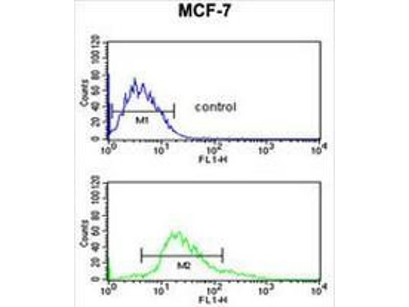 Flow Cytometry (FACS) image for anti-Cytokeratin 1 (KRT1) (AA 422-451), (Middle Region) antibody (ABIN951809)