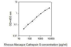 Image no. 1 for Cathepsin S (CTSS) ELISA Kit (ABIN2748003)