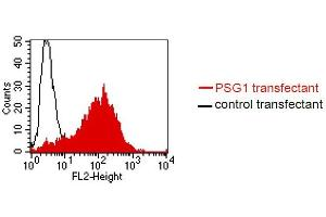 Flow Cytometry (FACS) image for anti-Pregnancy Specific beta-1-Glycoprotein 5 (PSG5) antibody (ABIN108731)