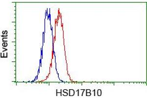 Image no. 7 for anti-Hydroxysteroid (17-Beta) Dehydrogenase 10 (HSD17B10) antibody (ABIN1498724)