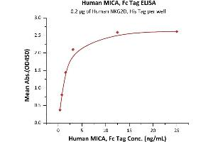 Image no. 3 for MHC Class I Polypeptide-Related Sequence A (MICA) (AA 24-308) (Active) protein (Fc Tag) (ABIN7013491)