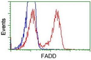 Flow Cytometry (FACS) image for anti-Fas (TNFRSF6)-Associated Via Death Domain (FADD) antibody (ABIN2453015)