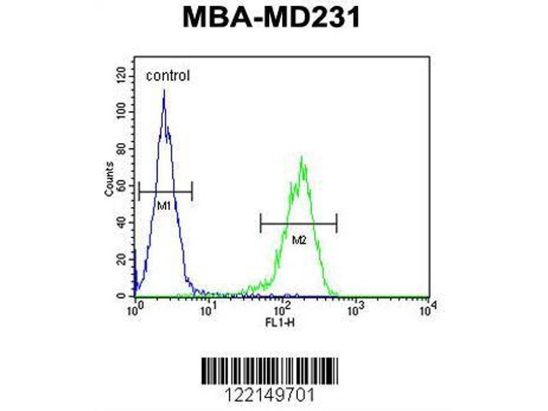 Flow Cytometry (FACS) image for anti-YWHAZ antibody (tyrosine 3-Monooxygenase/tryptophan 5-Monooxygenase Activation Protein, zeta Polypeptide) (AA 65-93) (ABIN652428)