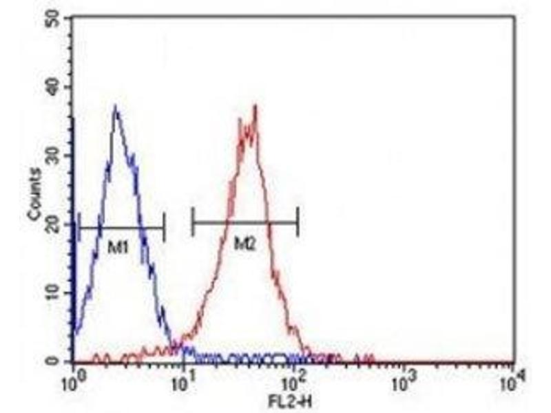 Image no. 1 for anti-Aldehyde Dehydrogenase 2 Family (Mitochondrial) (ALDH2) antibody (ABIN3029897)