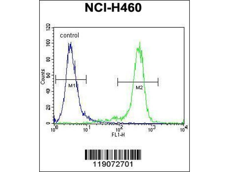 Flow Cytometry (FACS) image for anti-Nibrin antibody (NBN) (AA 602-630) (ABIN655721)