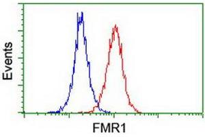 Image no. 8 for anti-Fragile X Mental Retardation 1 (FMR1) antibody (ABIN1498287)