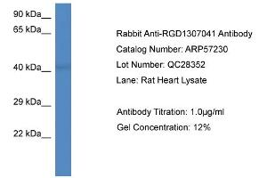 Image no. 1 for anti-PCI Domain Containing 2 (PCID2) (Middle Region) antibody (ABIN2787130)