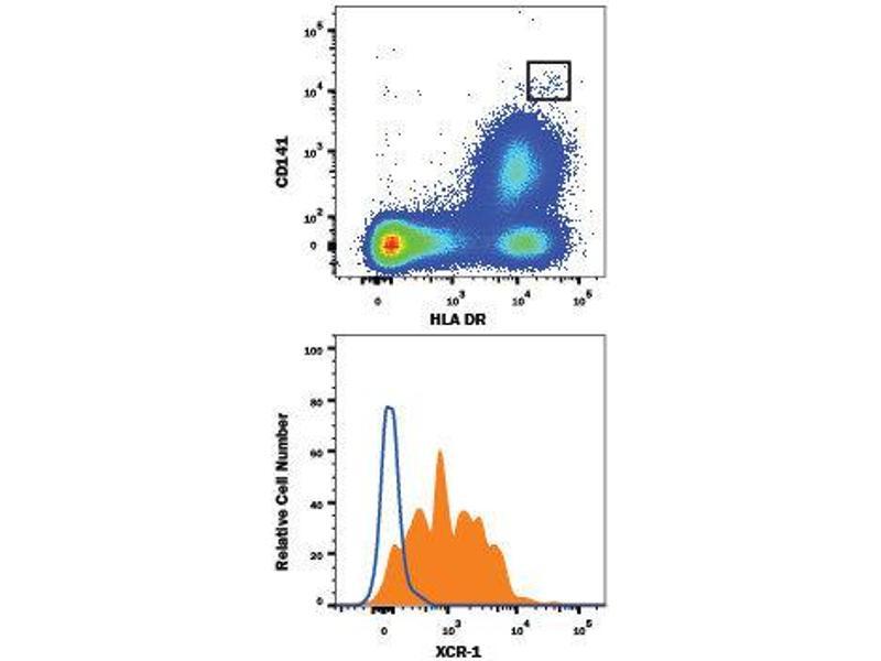 Flow Cytometry (FACS) image for anti-Chemokine (C Motif) Receptor 1 (XCR1) (AA 1-31), (AA 168-190), (AA 251-267), (AA 89-103) antibody (PE) (ABIN4897811)