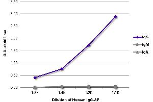 Image no. 1 for Human IgG isotype control (Alkaline Phosphatase (AP)) (ABIN375646)