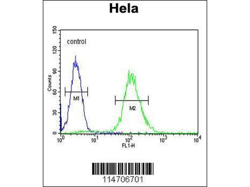 Flow Cytometry (FACS) image for anti-Cyclin G1 (CCNG1) (AA 20-53), (N-Term) antibody (ABIN654893)