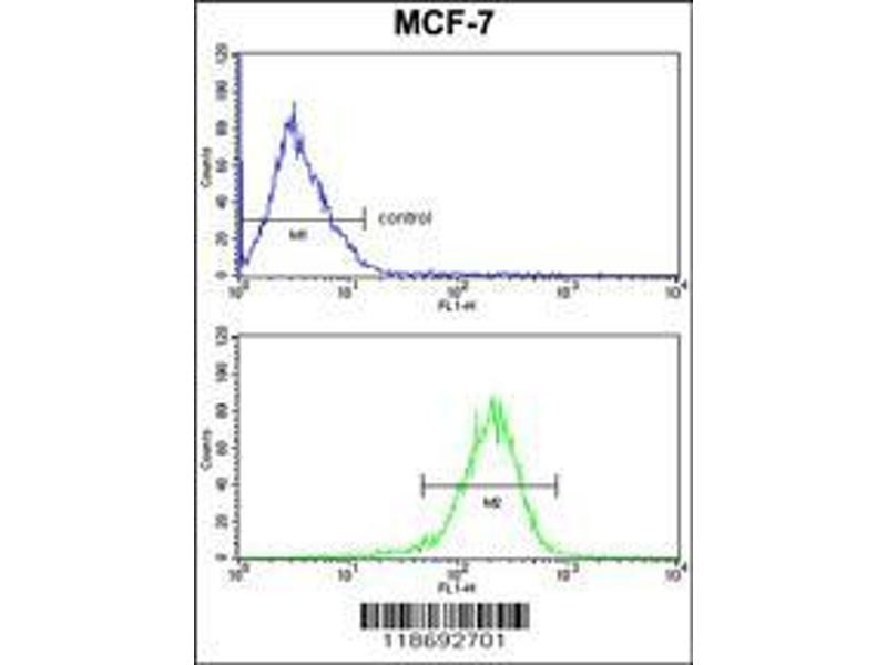 Flow Cytometry (FACS) image for anti-Complement Component 1, Q Subcomponent, A Chain (C1QA) (AA 198-227), (C-Term) antibody (ABIN391492)