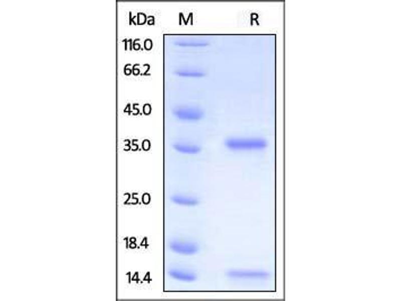 View Biomineralization: