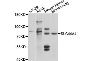 Image no. 1 for anti-Solute Carrier Family 44, Member 4 (SLC44A4) antibody (ABIN4905203)