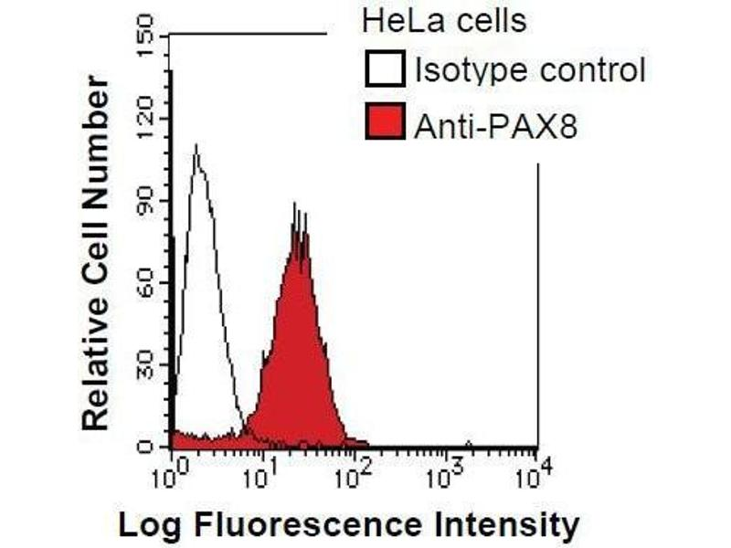 Flow Cytometry (FACS) image for anti-Paired Box 8 (PAX8) antibody (ABIN933101)