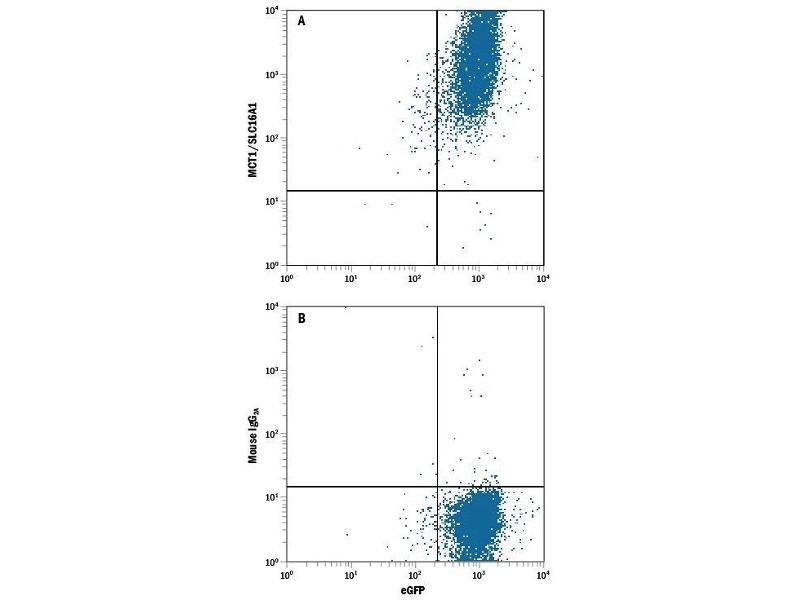 Flow Cytometry (FACS) image for anti-Solute Carrier Family 16, Member 1 (Monocarboxylic Acid Transporter 1) (SLC16A1) (AA 1-500) antibody (ABIN4899150)