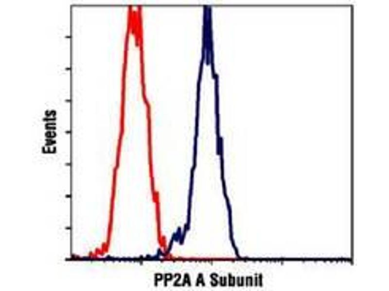 image for anti-Protein Phosphatase 2, Regulatory Subunit A, alpha (PPP2R1A) (C-Term) antibody (ABIN354403)
