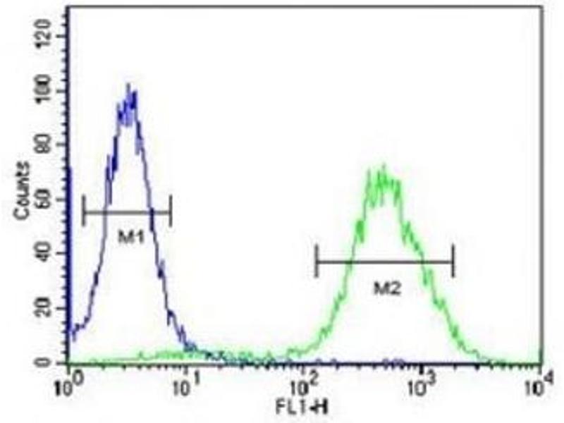 Image no. 1 for anti-Chemokine (C-C Motif) Receptor 1 (CCR1) (AA 1-30) antibody (ABIN3030216)