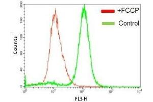 Image no. 1 for TMRE Mitochondrial Membrane Potential Assay Kit (Fluorometric) (ABIN2487084)