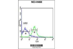 Flow Cytometry (FACS) image for anti-PRKACA antibody (Protein Kinase A, alpha) (AA 67-94) (ABIN390798)
