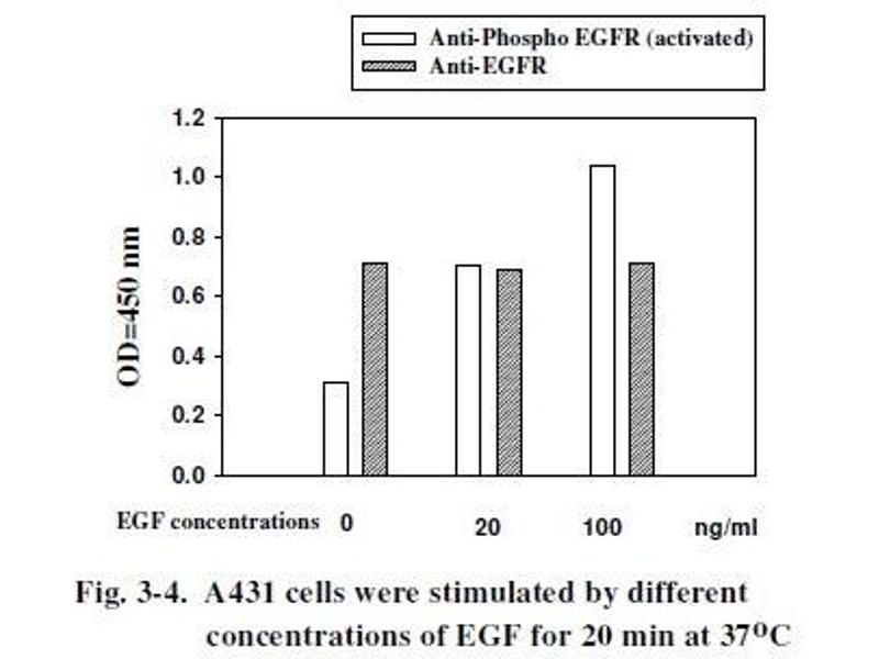 Epidermal Growth Factor Receptor (EGFR) ELISA Kit (7)