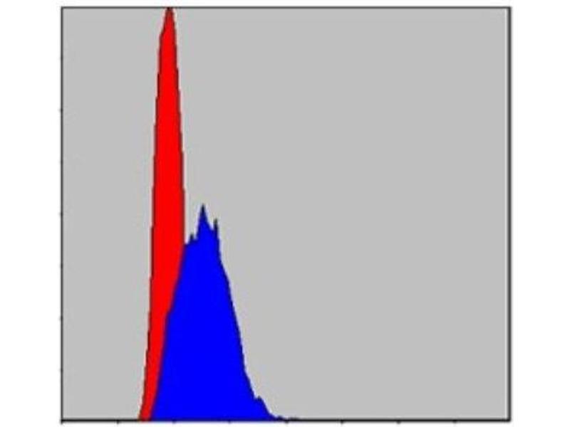 Flow Cytometry (FACS) image for anti-Jun Proto-Oncogene (JUN) antibody (ABIN4285648)
