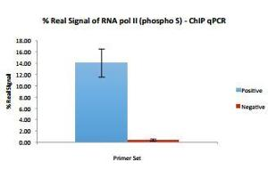 Chromatin Immunoprecipitation (ChIP) image for anti-Polymerase (RNA) II (DNA Directed) Polypeptide F (POLR2F) (C-Term), (Non-phosphorylated), (phosphorylated) 抗体 (ABIN3071653)