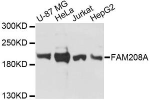 Image no. 1 for anti-Family with Sequence Similarity 208, Member A (FAM208A) antibody (ABIN6567816)