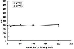 Image no. 1 for Mitogen-Activated Protein Kinase 14 (MAPK14) (AA 9-352) protein (GST tag) (ABIN5570140)