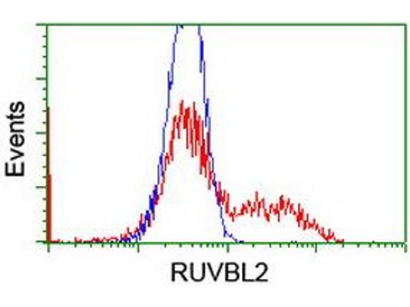 image for anti-RuvB-Like 2 (E. Coli) (RUVBL2) (AA 113-370) antibody (ABIN1490849)