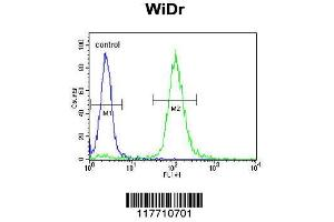 Flow Cytometry (FACS) image for anti-TRKA antibody (Neurotrophic Tyrosine Kinase, Receptor, Type 1) (ABIN652382)