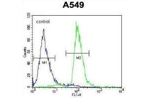 Image no. 3 for anti-PARP1 Binding Protein (PARPBP) antibody (ABIN2995516)