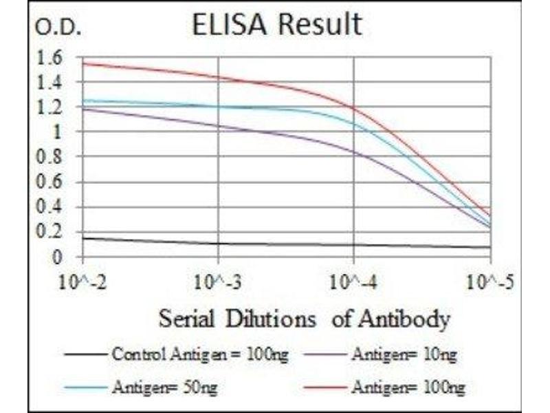 ELISA image for anti-Cyclin-Dependent Kinase 2 (CDK2) antibody (ABIN4297025)