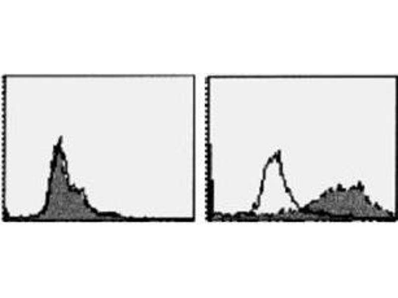 Flow Cytometry (FACS) image for anti-Tumor Necrosis Factor Receptor Superfamily, Member 13C (TNFRSF13C) antibody (ABIN1449226)