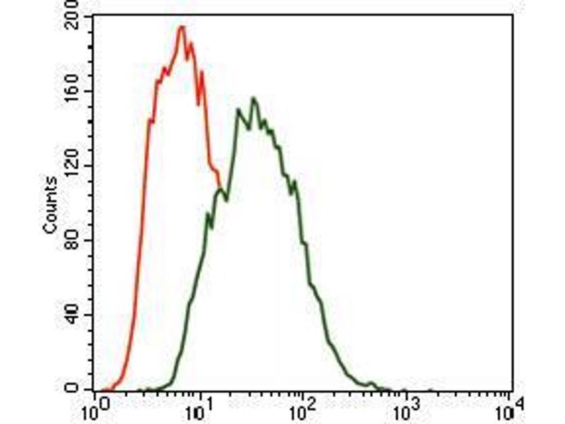 Image no. 1 for anti-MAP/microtubule Affinity-Regulating Kinase 3 (MARK3) (AA 435-658) antibody (ABIN1098125)