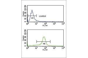 Image no. 1 for anti-Calcium Channel, Voltage-Dependent, alpha 2/delta Subunit 1 (CACNA2D1) antibody (ABIN3003877)