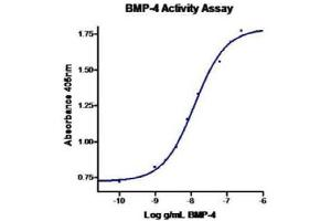 Image no. 2 for Bone Morphogenetic Protein 4 (BMP4) (Active) protein (ABIN1525765)