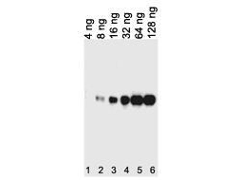 image for anti-His Tag antibody (ABIN387750)